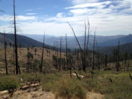 Woodpecker Trail, fire-ravaged.
